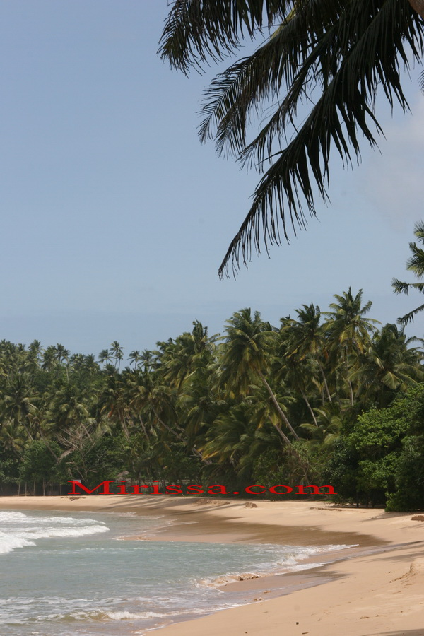 Tropical Beach in Sri Lanka, Mirissa